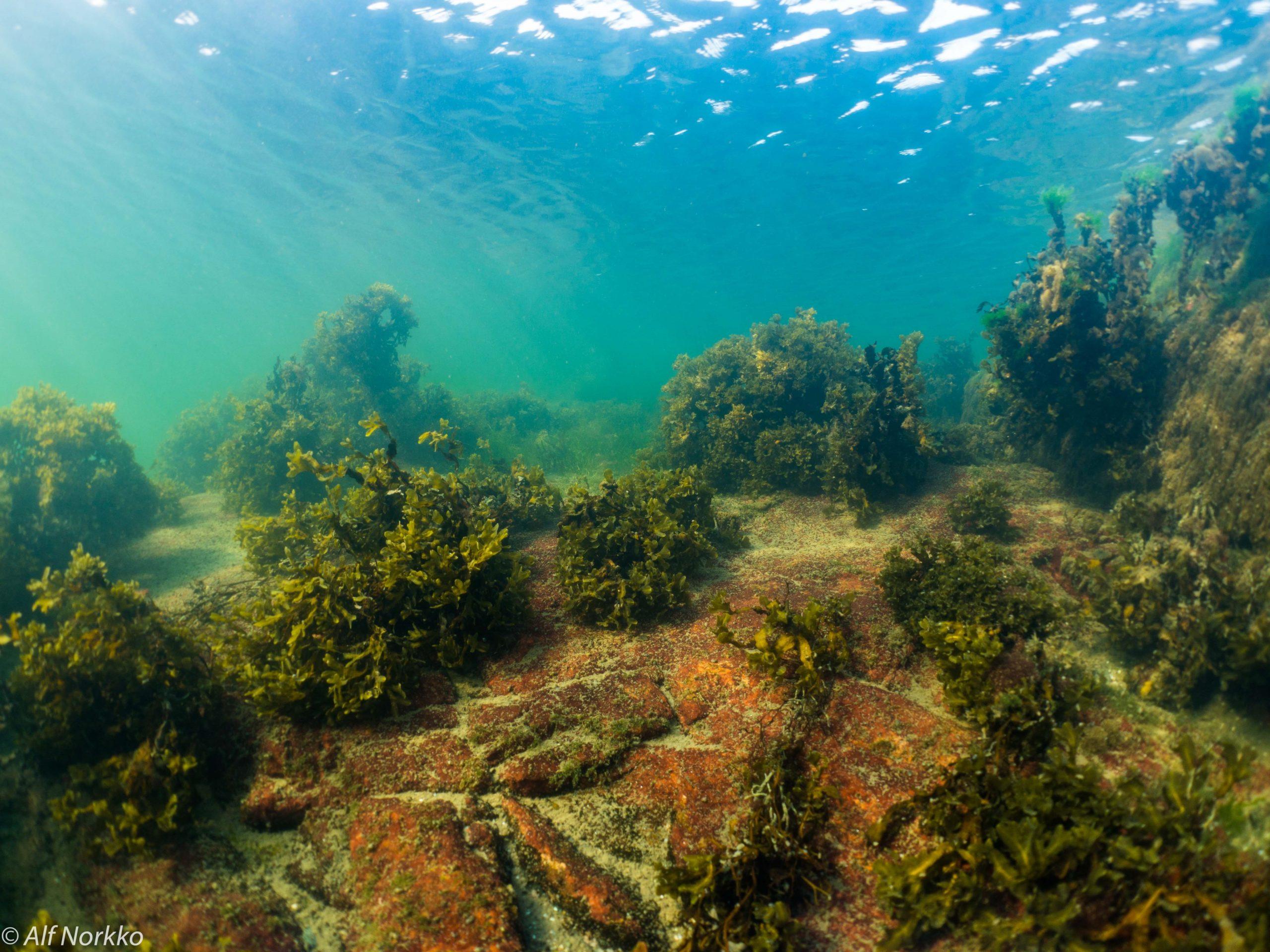 Cover for article 'Tvärminne vill berätta varför Östersjön är värd att bevaras'